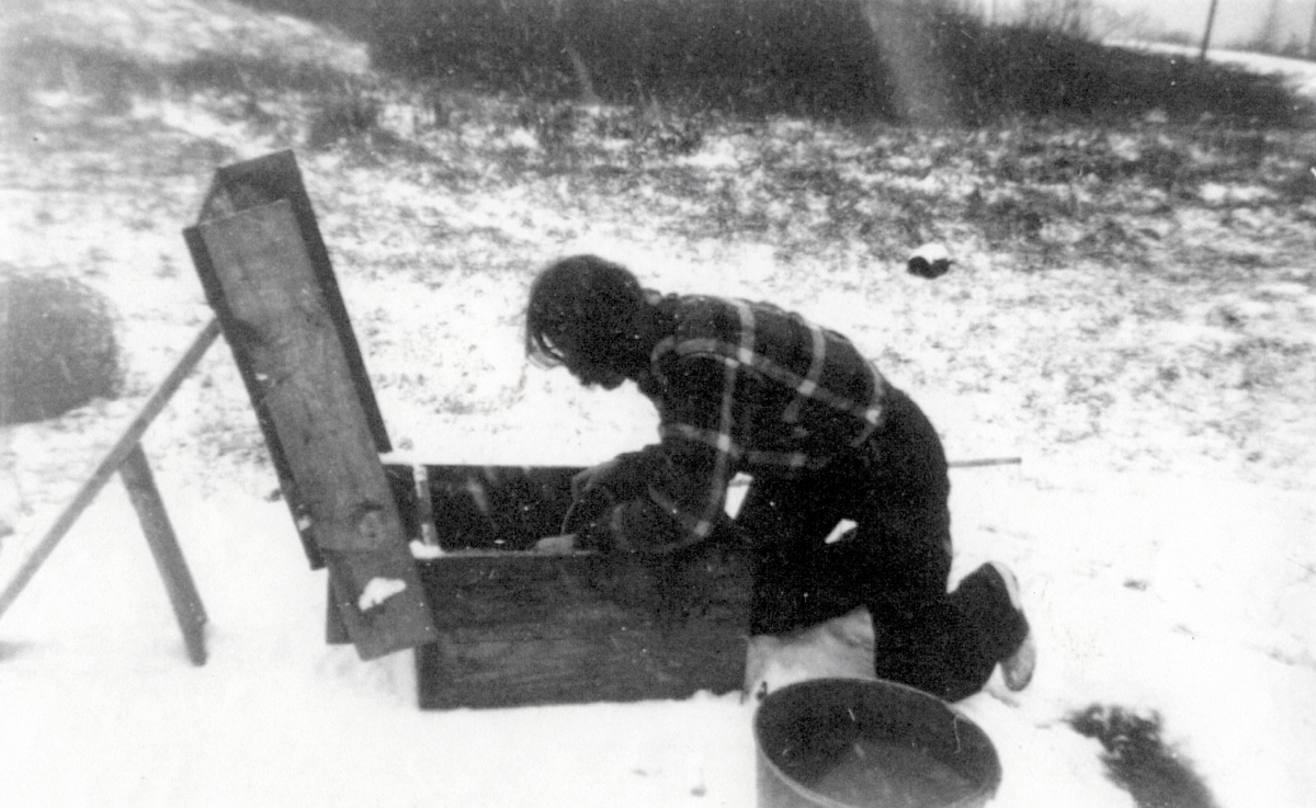 Leola Mae Pomroy - later Mrs. Walter Eugene Higgins - Watering the Family Cows