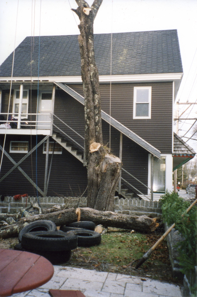 Removal of Original Trees at Southwest Harbor Library