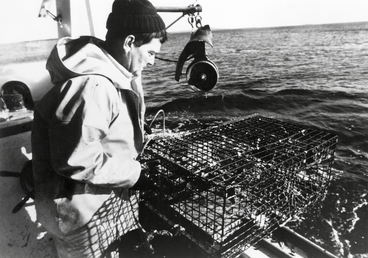Gary A. Parsons Hauls One of his New Wire Lobster Traps