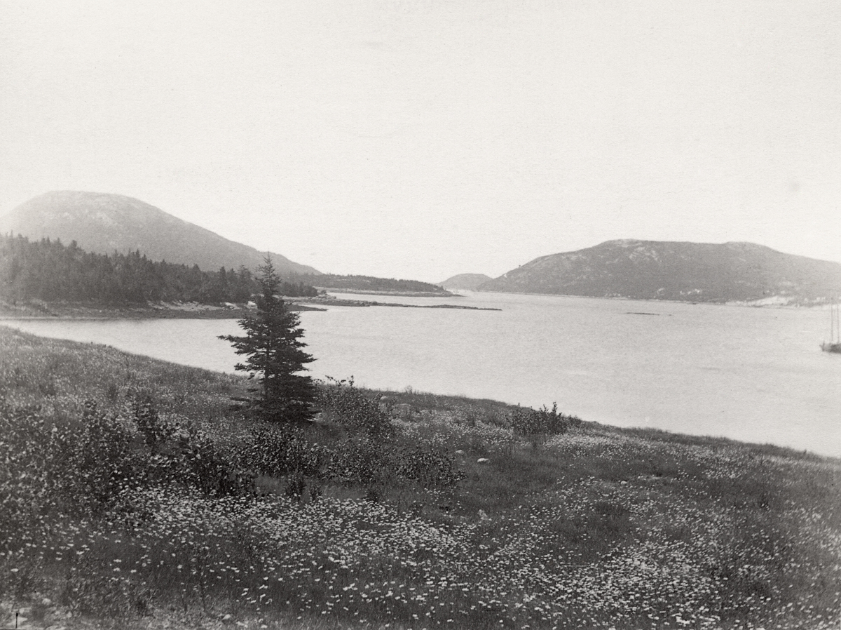 View South on Somes Sound