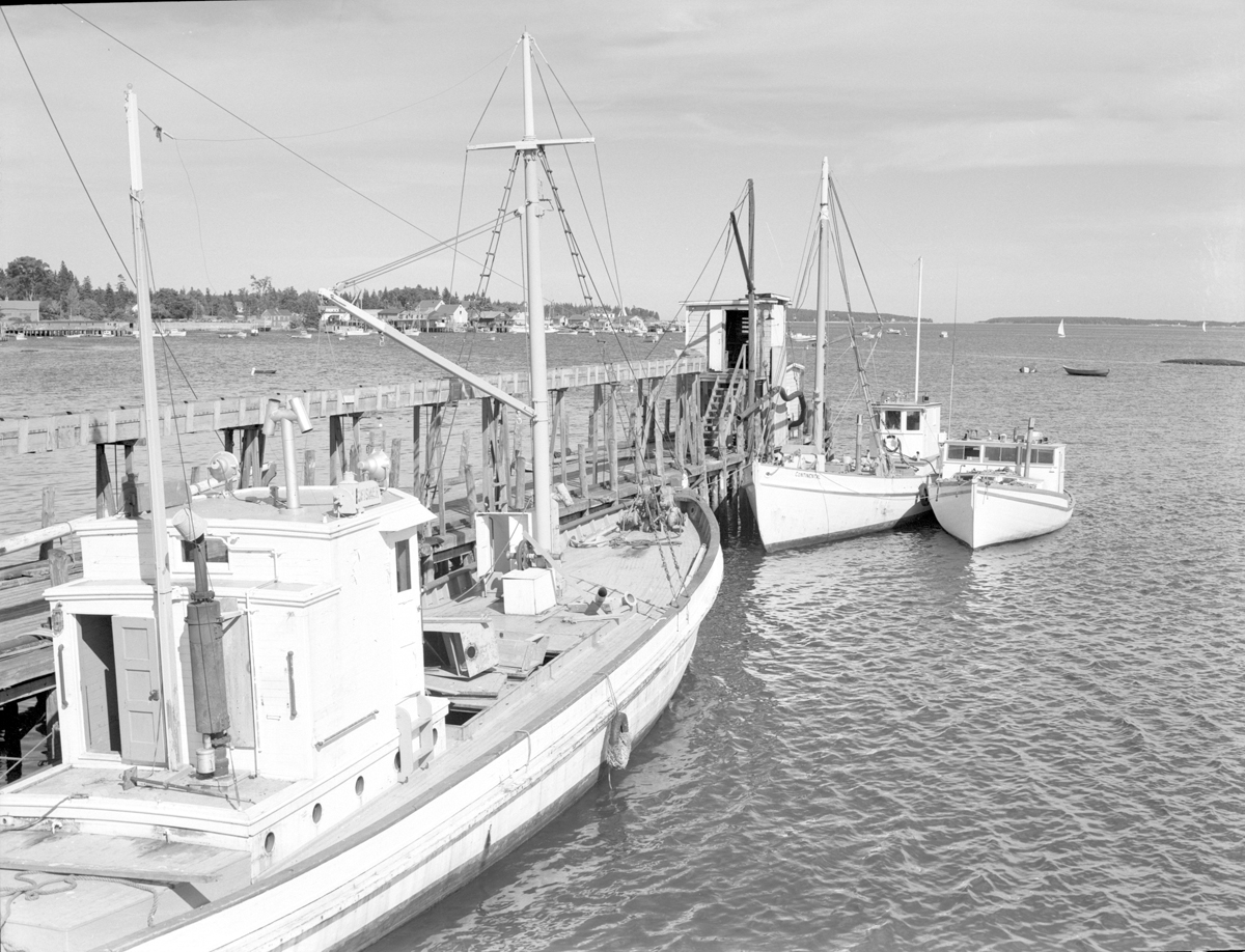 Sardine Carrier Continental and Others at the J.W. Stinson and Son in Southwest Harbor