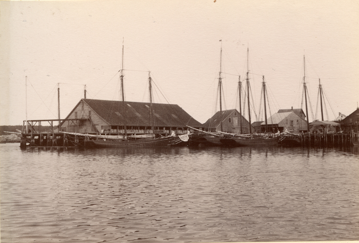 Fishing Schooners at Gloucester Wharves