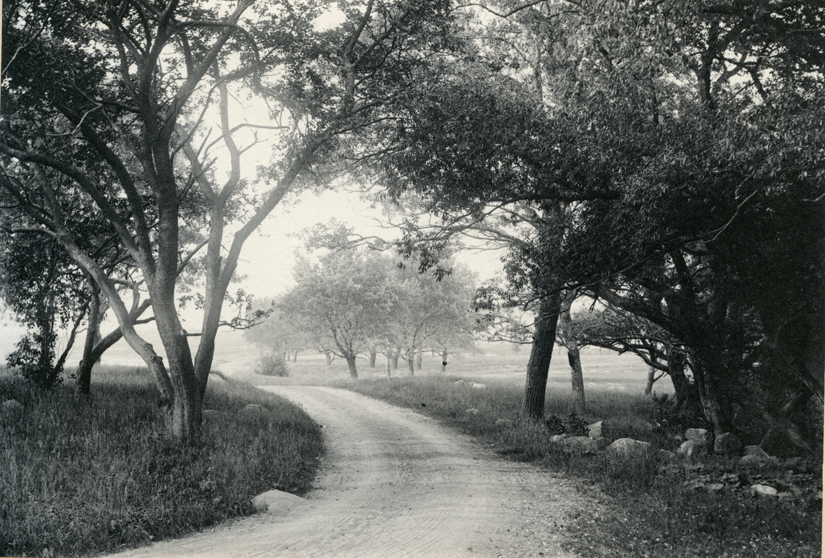 Eastern Point, The Road by Niles Farm