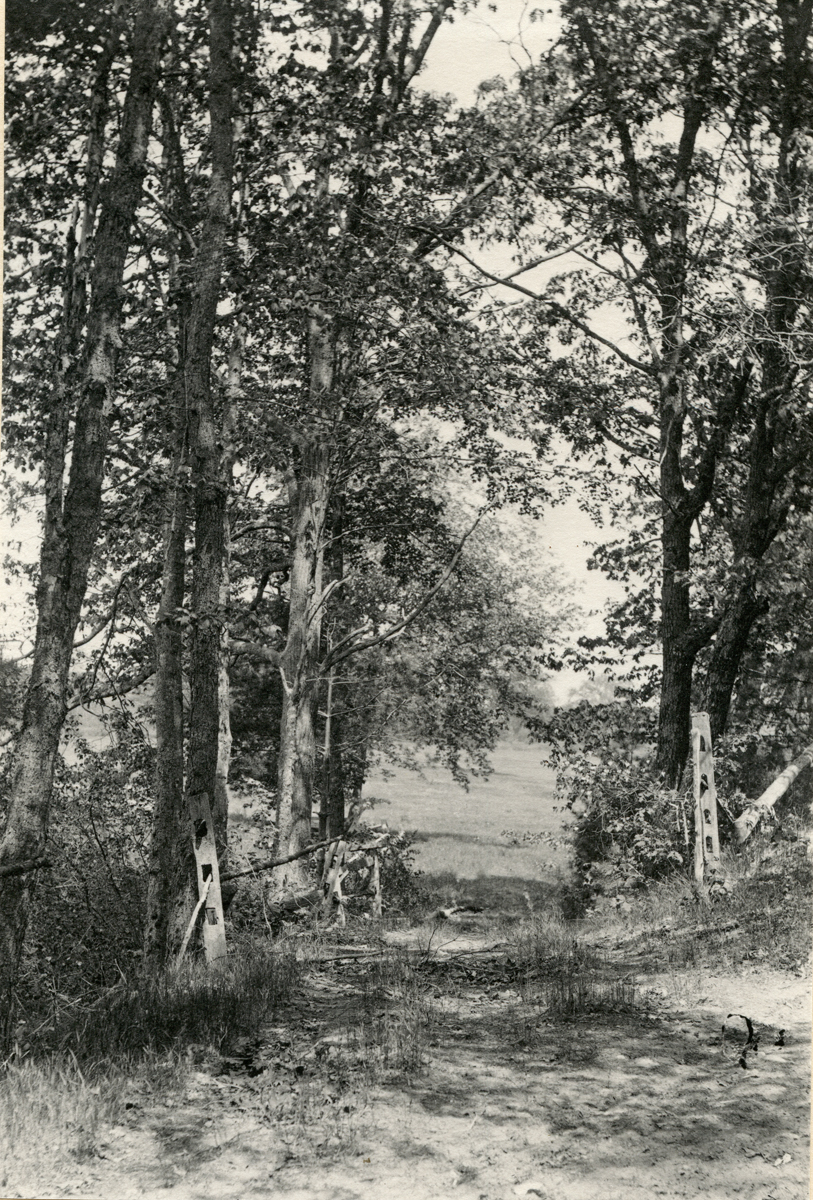 Road to the Assabet River