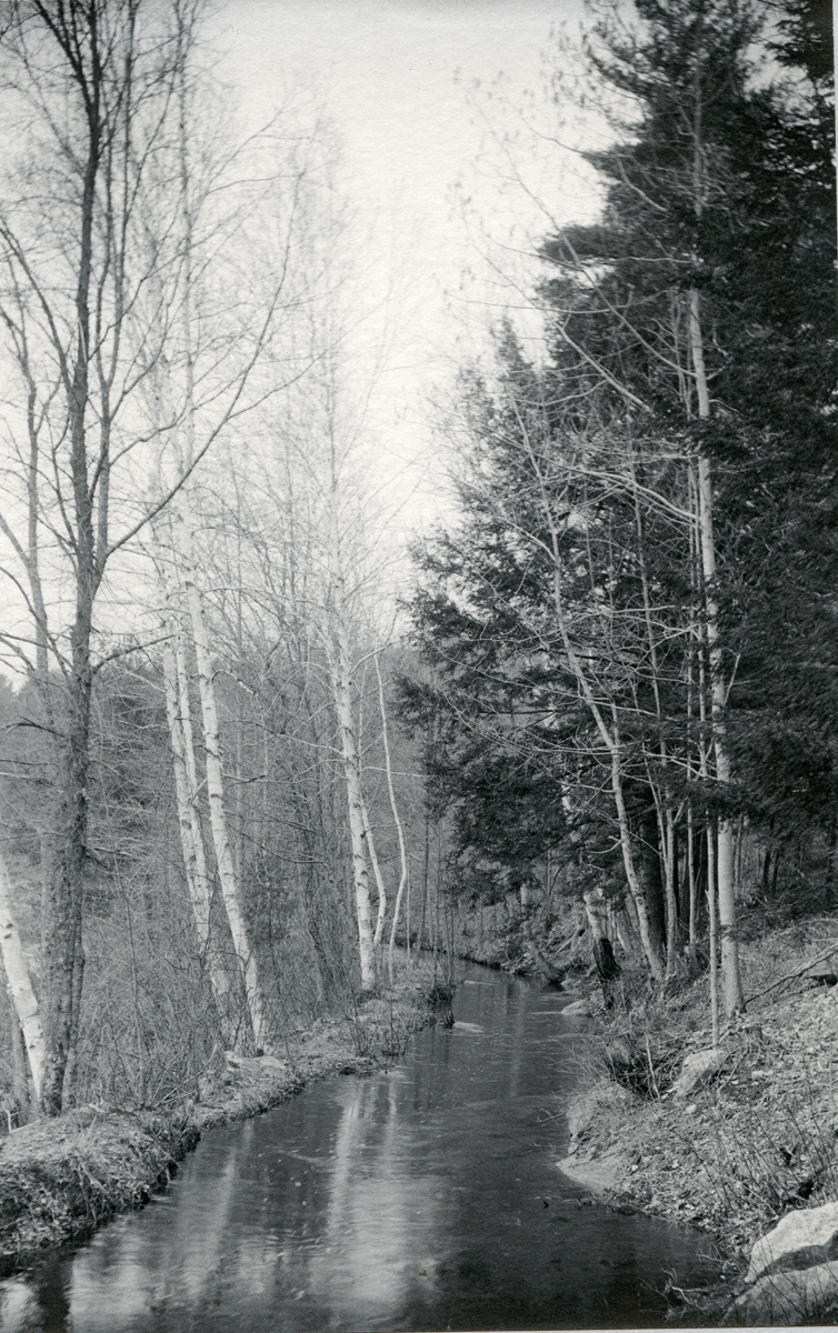 Saw Mill Canal